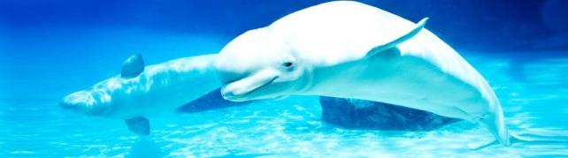 Подводный мир и животные_208