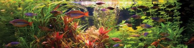 Подводный мир и животные_210