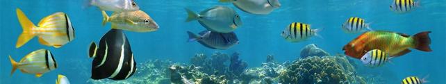 Подводный мир и животные_2