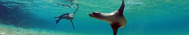 Подводный мир и животные_3