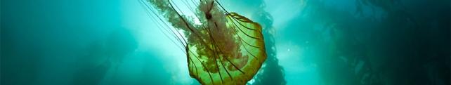 Подводный мир и животные_5