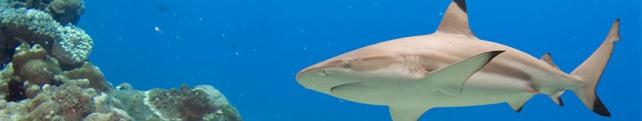 Подводный мир и животные_7