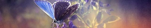 Подводный мир и животные_94