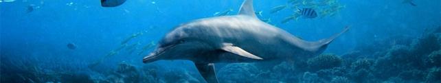 Подводный мир и животные_9